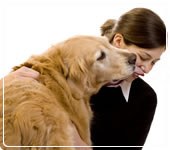 Ingrijitor animale, ingrijire animale, plimbare catel, caine, pisica, caut ingrijitoare animale